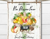 Farmhouse Summer Pears, Pear Blossom, Fruit, Digital, DIY Pear Sign, Fabric Transfer, Pillow Image, Wreath Decor, Wood, PNG, Tiered Tray