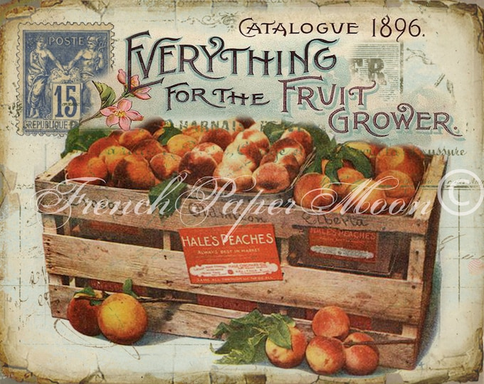 Shabby Vintage Digital Fruit Graphic, Vintage Peach Download, Antique Fruit Advertisement, Fruit Fabric Transfer