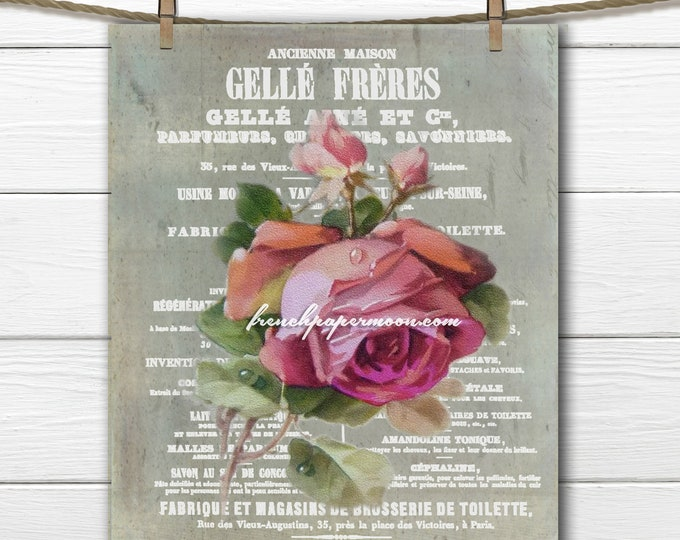 Vintage Shabby French Graphic Rose Digital, French Pillow Image, French Craft Supply, Victorian Rose, Large Image