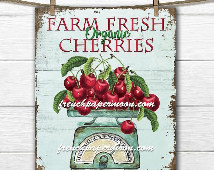 Farmhouse Cherry Digital, Vintage Cherries, Scale, Wood, Shabby Vintage Fruit, Kitchen Cherries, Fabric Transfer, Kitchen Decor Print
