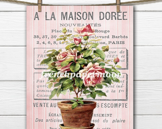 Shabby French Roses, Digital French Rose Topiary, Potted Roses, French Graphics, French Pillow Image, Large Size