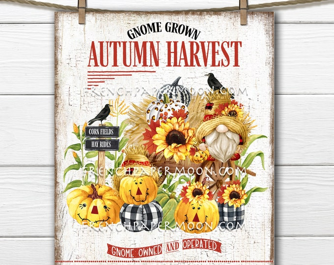Scarecrow Gnome, Autumn Harvest, Plaid Pumpkins, Corn, Hay Rides, Fall Decor Sign, Image Transfer, Wreath Accent, Tiered Tray Decor, PNG