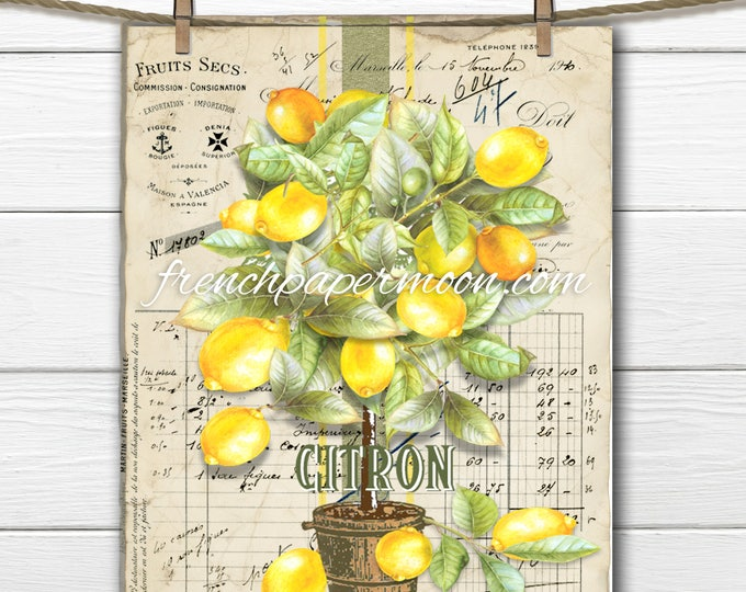 Digital French Lemon Tree, Watercolor Lemons, Lemon Topiary, Citron, French Graphics, Large Image Transfer Graphic, Pillow Image