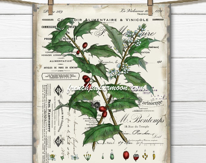 Antique French Holly Print, Vintage Digital Holly Botanical, Holly Pillow Image, French Xmas Holly, DIY Xmas Sign, Fabric Transfer, PNG