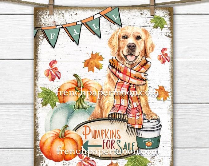 Golden Retriever Fall Print, Pumpkins for Sale, Pumpkin Latte, Golden Fall, Pillow Image, Fabric Transfer, Digital Sign, Transparent, Wood