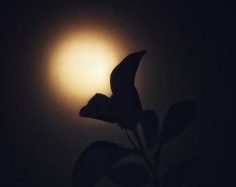 Nature Photography, Moon Photography, Dreamy, Sky, Dark, fPOE, Don't Let Me Know That I'm Dreaming