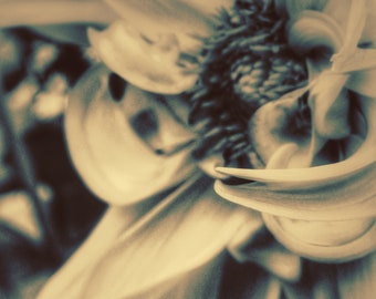 Nature Photography, Flower Photography, Macro, Macro Photography, Romantic, fPOE, Sepia Spring