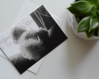 Henry in Window - notecard - Holiday, Thinking of You, or Sympathy (Pet loss)