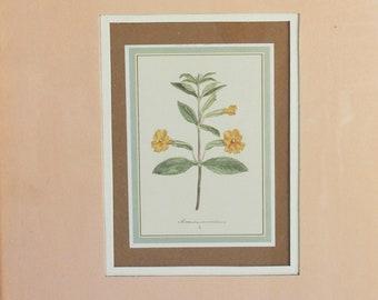 Vintage 1970s 1980s Botanical Print / Academy Arts Framed Flower Art / Home And Garden Decor / Mimulus Monkey Flower / Intercraft