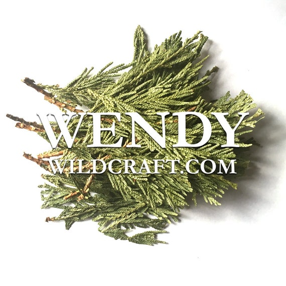 Cedar Leaf Wildcrafted