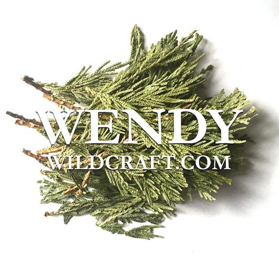 Cedar Leaf Wildcrafted