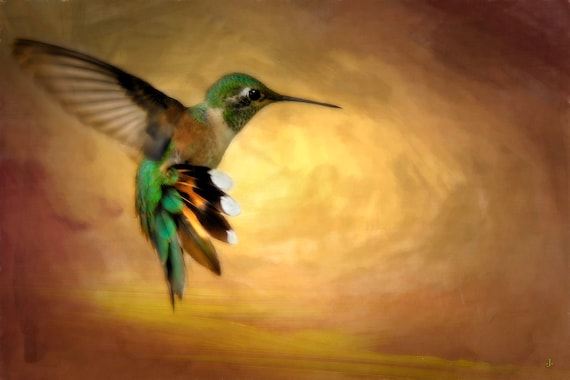 Hummingbird in Flight 2, Fine Photo Artistry by John Strong Arts - a beautiful capture of a Hummingbird, perfect for the home, office or den