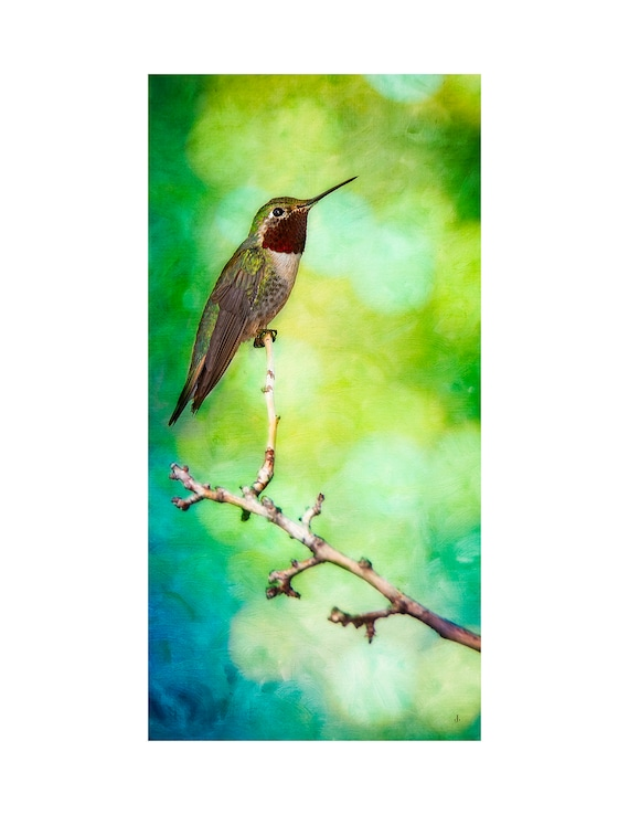 Hummingbird - Tiny Dancer, Fine Art Photography and Fine Photo Artistry for Home and Office by John Strong Arts/JStrong Photos
