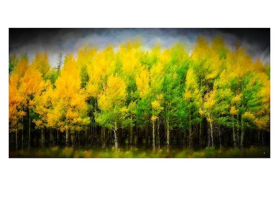 For the Love of Trees, Fine Art Photography, John Strong Arts, Wall Art, Office Art, Fine Art, Home Decor, Aspen Trees