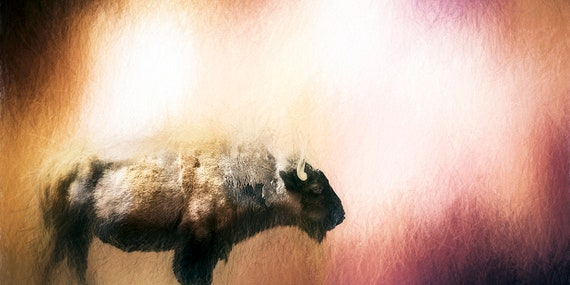 Spirit, Fine Photo Artistry, John Strong Arts, JStrong Photos, Bison image captured near Daniels Park, Colorado.  Fine Art Photography