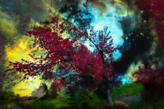 Fine Art Photography, Trees 14, Treelit Universe, Fine Art Print, John Strong Arts, JStrong Photos, Wall Art, Home Decor, Office Decor