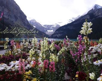 Travel Photo Lake Louise Alberta Canada, snow-capped mountains, Pink snapdragons, @StudioGauthier, daisies, pink home decor, blue home decor