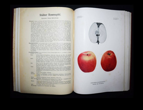 Rare complete book on Schweizerisches Fruit pictures Plant-Fruit-Apples Pears-Switzerland 100 prints in total