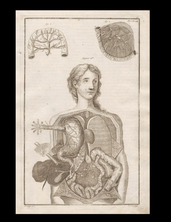 Antique Original Engraving  woman Anatomy Muscles Lung hearts  Skeleton Medicine  Copperplate Circa  1770