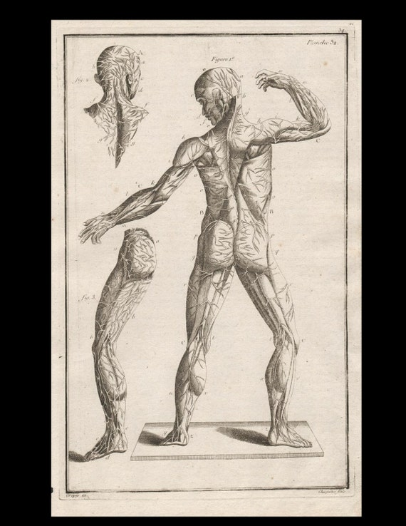 Antique Original Engraving  Human Anatomy Muscles Medicine Copperplate Circa  1770