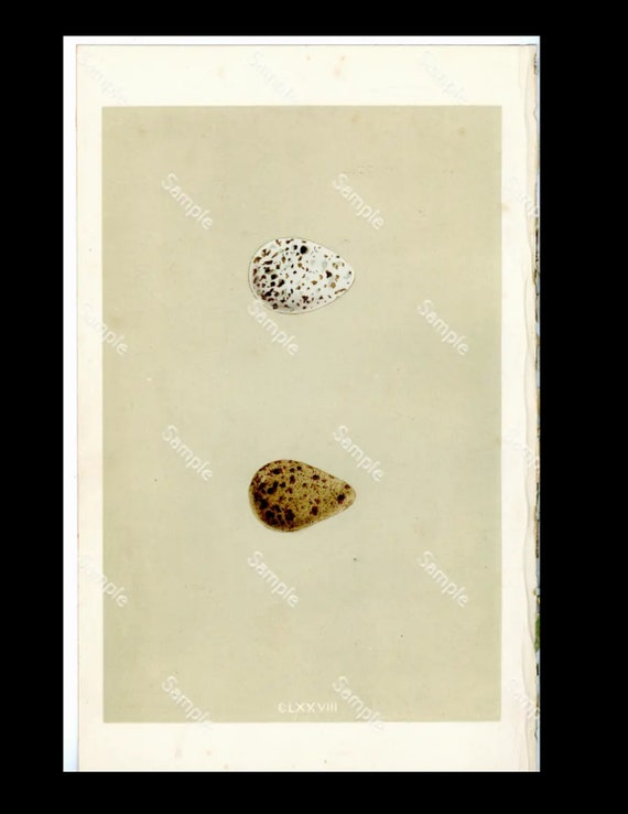 A Natural History of the Nests & Eggs of British Birds print first edition