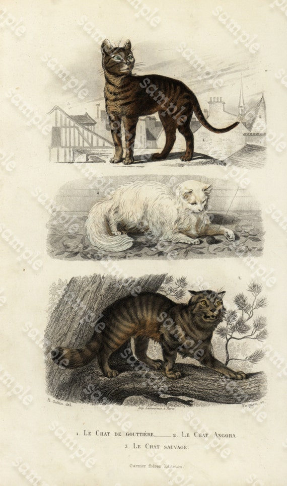 Original Hand Colored Engraving of Dogsby Edouard TRAVIES Terre Neuve