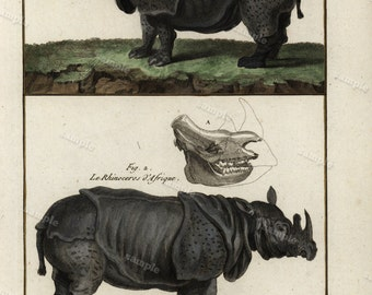 1780 Original Antique Natural History copperplate of Animals- Histoire Naturelle -Rehinosarous  - Decorative art- wall art - home decore