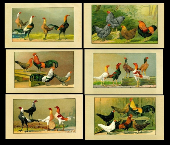 Antique original poultry Color Lithograph 6 prints of Roosters