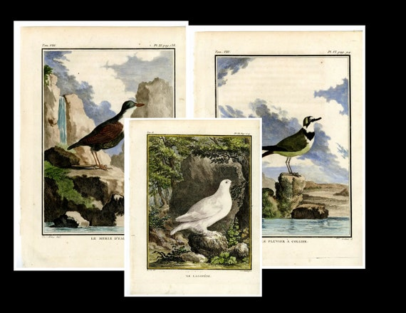 18th century, Original antique, Hand colored , Copper Engravings Le Pluvier a Collier  Natural history 3 prints