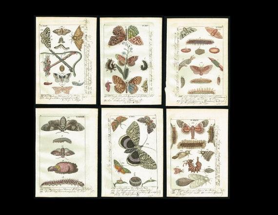 Original rare Entomology INSECTS  Butterflies & Moths, 6 Hand-Col. Entomology Plates, Wilhelm Naturgeschichte 1832