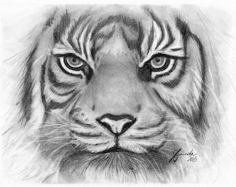 Pencil Drawing Print - Tiger Eyes