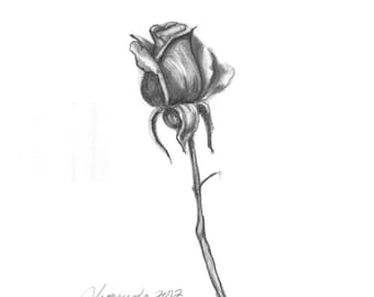 Pencil Drawing Print - The Rose Day 95