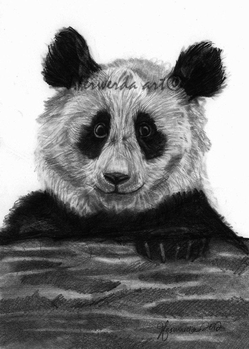 Pencil drawing print pondering panda day 137