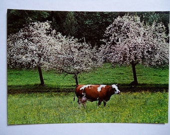 Cow in the Meadow - Vintage Postcard, West Germany