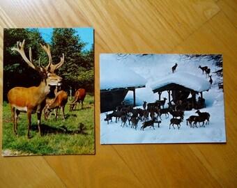 Deer  - Two Postcards, West Germany