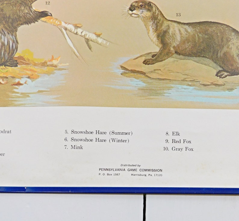 Ned Smith Mammals of the Mountain Poster, Vintage PA Game Commission  Wildlife Chart, Copyright 1965, Classroom Chart, NS4