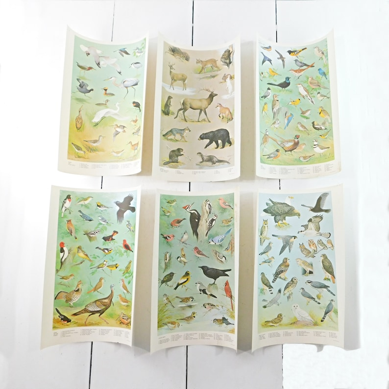 Set of 6 Ned Smith Wildlife Prints, 1965 PA Game Commission Bird & Animal  Posters, 11