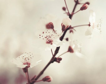 Botanical print, Fine Art photography, Flower wall art, Living room art, Bedroom decor / Purple plum tree blossom No. 1