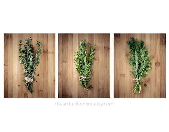Kitchen decor, Herb prints, Cooking art, Large wall art set, Large Home décor, Set of 3 prints / Culinary Herbs photo set