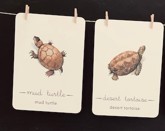 turtle flashcards