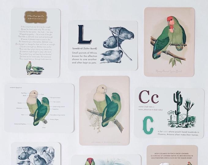 lovebirds flashcards