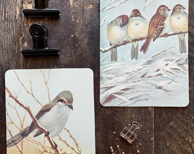 winter plumage flashcards