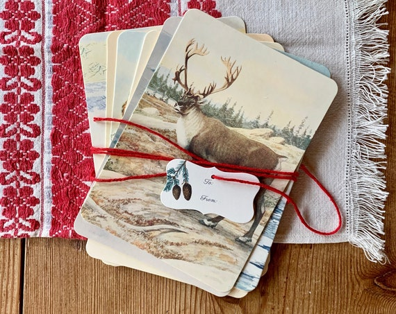 winter animal flashcards
