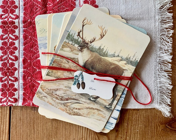winter animal flashcards