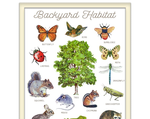 backyard habitat print