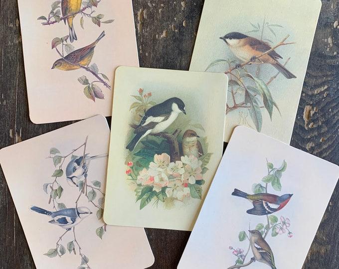 bird flashcards