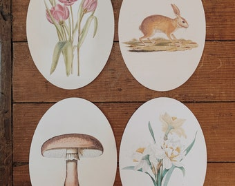 spring oval flashcards