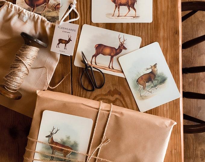 deer flashcards