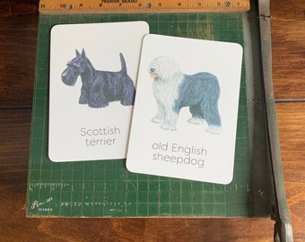 dog flashcards