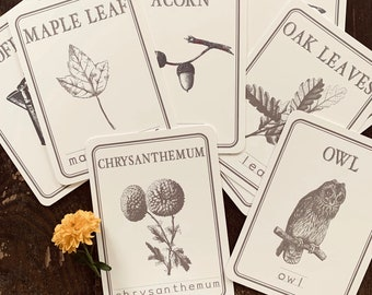 fall spelling flashcards